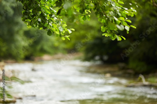 Fotobehang Zomer Landscape with a river through forest