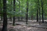 Beech forest (Fagus sylvaticus); Drents-Friese Wold National Park, Drenthe, Netherlands - 212734539