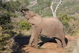 Elephant at Kariega Safari Park, South Africa - 212736787