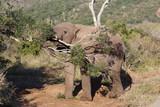 Elephant at Kariega Safari Park, South Africa