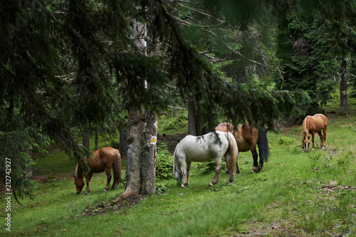 Herd of horses - 212742927