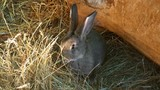 Rabbit eat grass. Nature background - 212757942