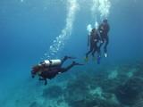 Group of Scuba Diver, Diving, in Labuanbajo, Flores, Indonesia - 212760566