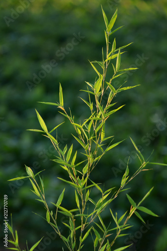 bamboo branch on cultivated field as a background