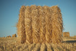 Hay bale on field with wheat straw and sky in the farm land at summer.