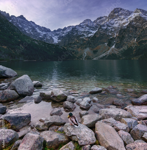 Autumn landscape of a high mountain lake with a drake.