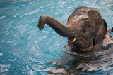 baby elephant playing in water