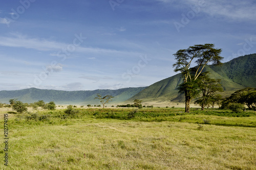 Fototapeta Ngorongoro Krater