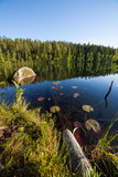 Fallen trees underwater at forest lake in Finland - 212790907