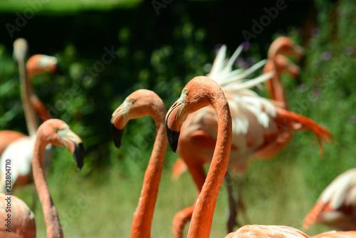 Flamingi w zoo