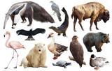 Set of fauna of North American animals. - 212806578