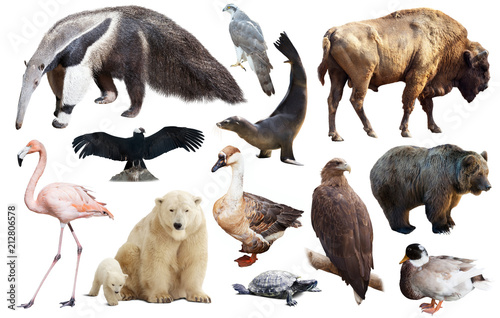 Fotobehang Wolf Set of fauna of North American animals.