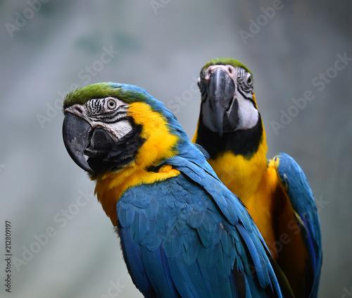 Fotobehang Papegaai macaw