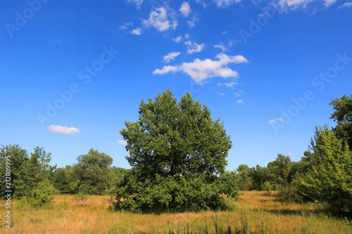 Fotobehang Zomer green tree on meadow