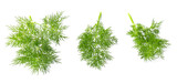 Dill branch on white - 212813177
