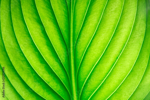 green leaf as background - 212824146