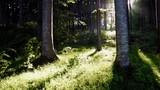 Walking towards beech trees in the evening sun. Little bucks flying through the air. - 212844317