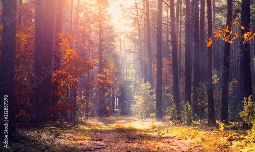 Plexiglas Herfst Tranquil autumn landscape