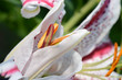 Blumen 948