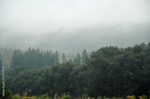 Plexiglas Herfst Landscape in the mist