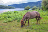 young horse grazing - 212878958