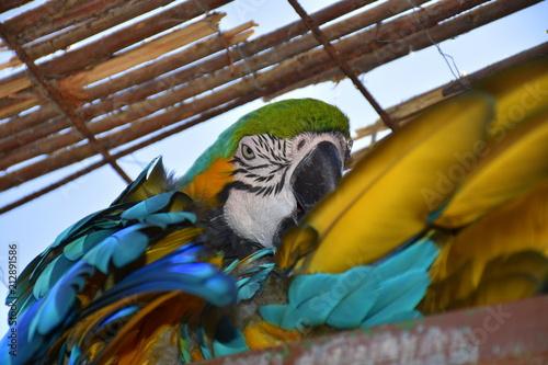Fotobehang Papegaai Papagei