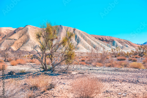 Foto Spatwand Zalm Tree in the mountains of Aktau