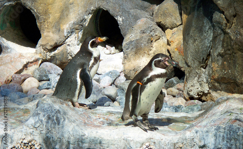 Fotobehang Pinguin Animals
