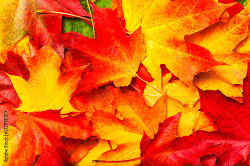 Red and Orange Autumn Leaves Background. Seasonal concept. - 212914300