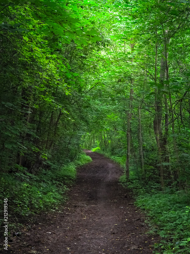 Fotobehang Groene Forest road under the arch of trees closing the sky.