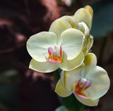 Fototapety Beautiful orchid branch on abstract blurred background