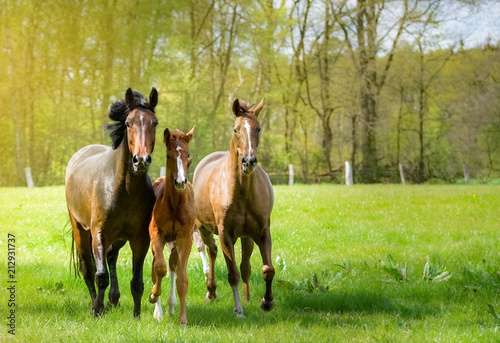 Pferde toben ausgelassen auf einer sonnendurchfluteten Pferdekoppel