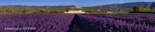 Foto Murales Panorama di campi di lavanda fiorita