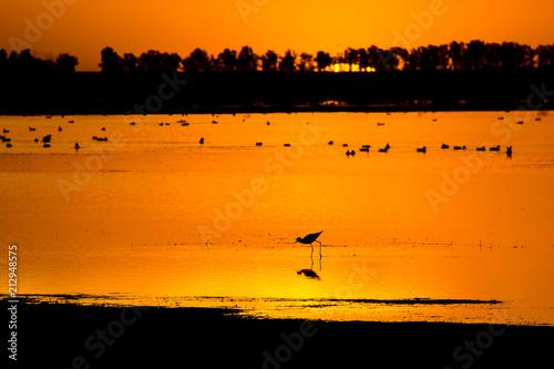 Aluminium Oranje eclat Silhouettes of birds in a lagoon at sunset
