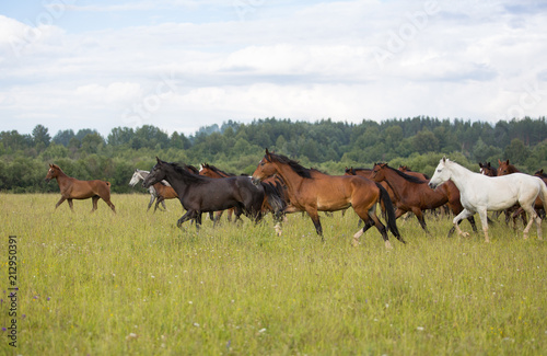 Fotobehang Paarden Herd of horses