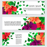 set of three banners, abstract headers with colorful hibiscus flower and leaves, botanical backgrounds with copy space - 212959140