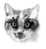 black and white cat close up in the detail - 212963304