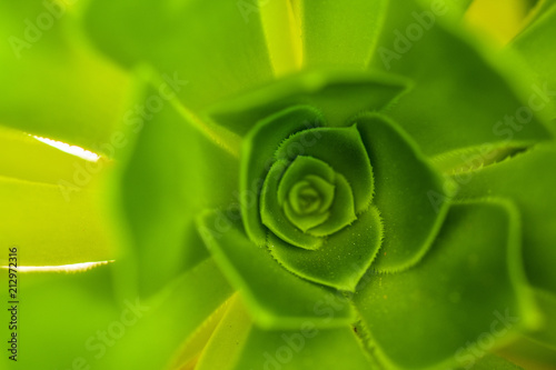 Green Plant - 212972316