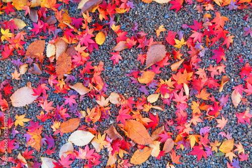 Plexiglas Lavendel 紅葉の境内の風景29