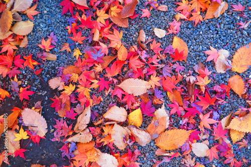 Aluminium Oranje eclat 紅葉の境内の風景25