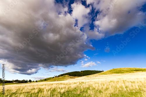 Plexiglas Lavendel Black cloud over Pine forest