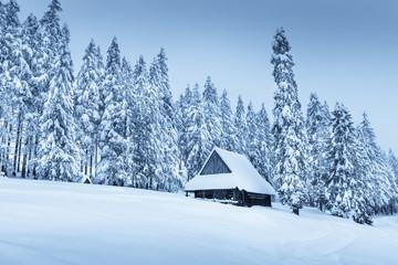 Winter landscape in blue toning