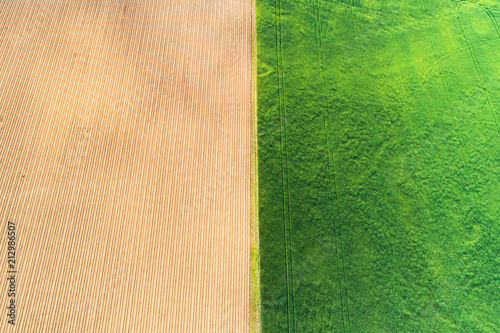 Foto Murales Agricultural field background