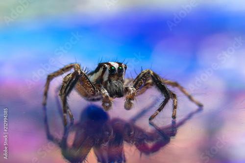 Fototapeta Macro spider colorful background