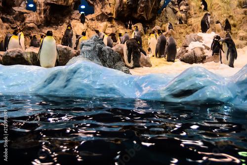 Fotobehang Pinguin Photo Picture of Wild Penguin Animal Bird Playing