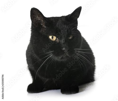 Fotobehang Kat black cat in studio