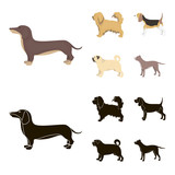 Pikinise, dachshund, pug, peggy. Dog breeds set collection icons in cartoon,black style vector symbol stock illustration web.
