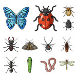 Different kinds of insects cartoon icons in set collection for design. Insect arthropod vector symbol stock web illustration. - 213005130