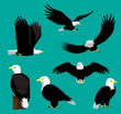 Bald Eagle Cartoon Vector Illustration