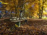 Empty park bench, Autumn at Lake Starnberg in Ambach, Bavaria, Germany, Europe - 213006340